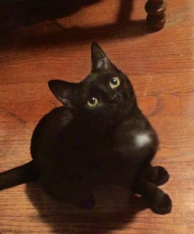 Meet Luna