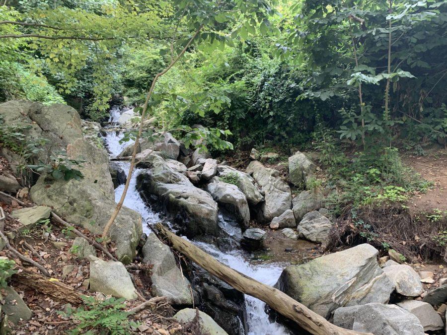 A creek runs through Turkey Run Park's trail. Turkey Run has some rough terrain and features streams and a miniature waterfall.